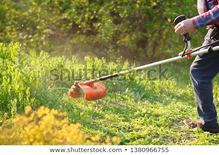 Gardening - cutting the grass Stock photo © brebca