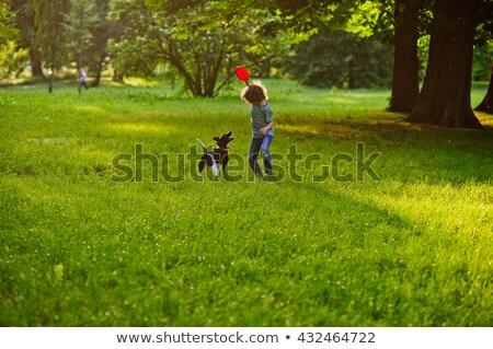 Küçük köpek açık havada çayır doğa Stok fotoğraf © pekour