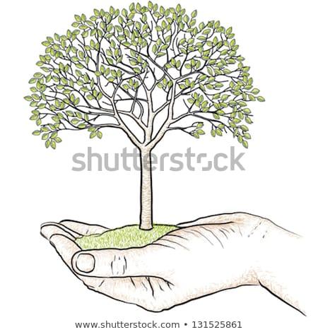 hand drawing tree on earth stock photo © rufous