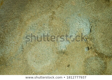 Concrete wall green with time and moisture Stock photo © pzaxe