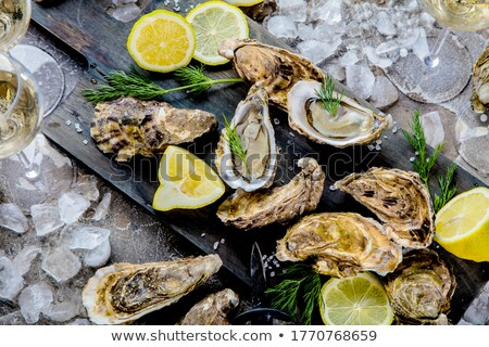 Mussels on Ice Stock photo © ildi