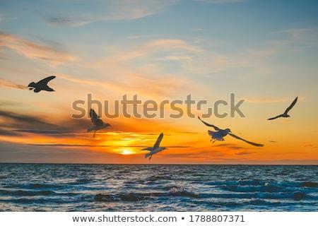 カモメ 日没 ビッグ 黄色 太陽 ストックフォト © Elenarts