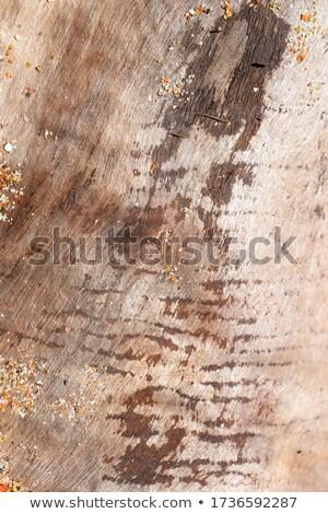 木の幹 表面 樹皮 多くの 亀裂 ツリー ストックフォト © pixelsnap
