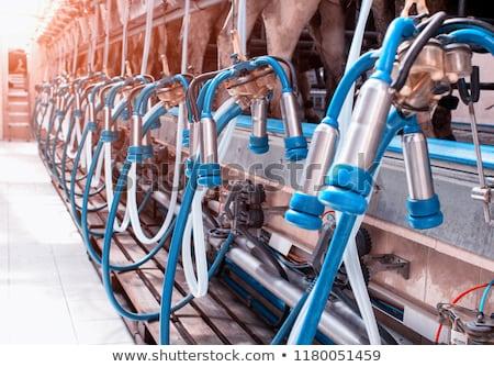 milking machines Stock photo © compuinfoto