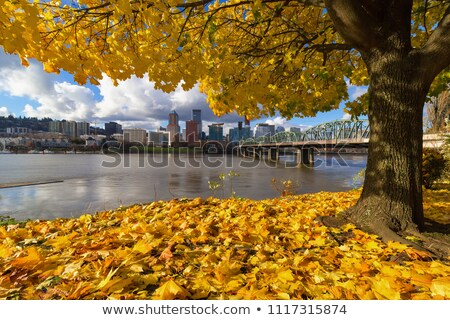 Fall Season Along Willamette River Portland Oregon Stock photo © davidgn