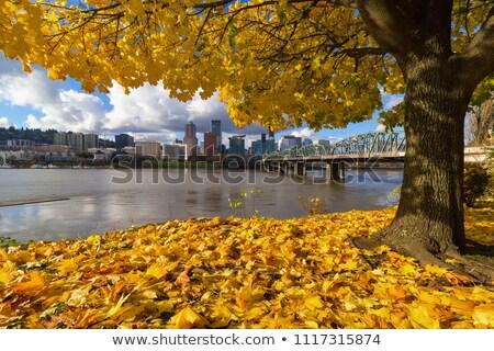 fall season along willamette river portland oregon stock photo © davidgn