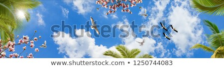 paar · witte · nest · paal · plaats · vogel - stockfoto © fesus