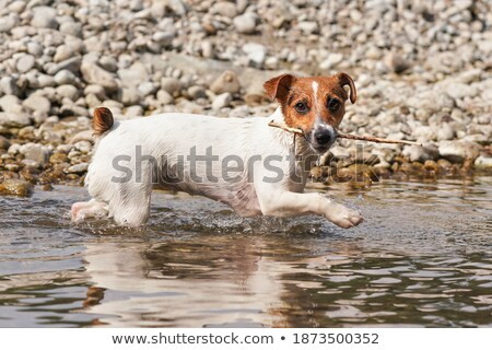 smal river mouth stock photo © 5xinc