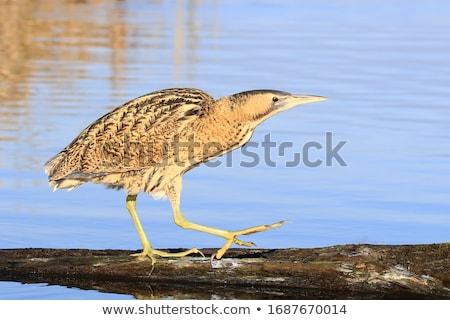 природы озеро лет животного красивой Сток-фото © chris2766