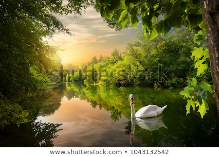 a forest with swans stock photo © bluering