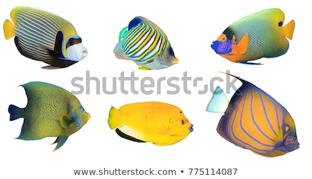 yellow fishes in the ocean stock photo © adrenalina