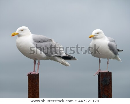 Two seagulls perched on a rusty ladder. Stock photo © latent