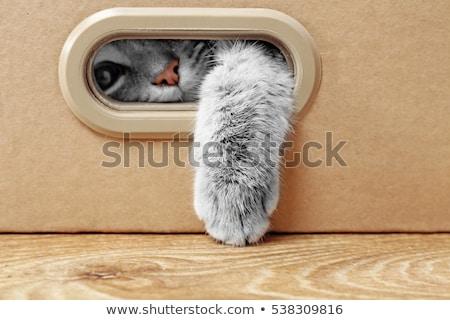 Kat jager grijs outdoor eten Stockfoto © simply