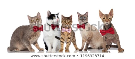 group of five cute cats with pink and red bowties stock photo © feedough