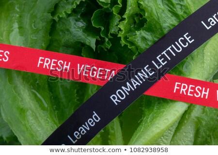 romaine lettuce e coli outbreak stock photo © lightsource