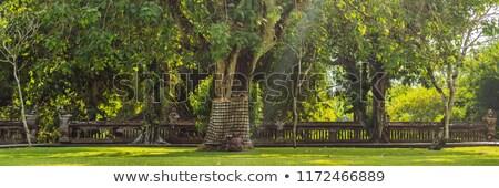 Ağaç bali Endonezya afiş uzun Stok fotoğraf © galitskaya