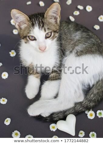 Sevimli küçük kedi yavrusu kalpler çiçekler bebek Stok fotoğraf © balasoiu