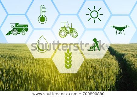 Landwirtschaft Industrie Landwirtschaft Technologie Nutzpflanzen Überwachung Stock foto © AndreyPopov
