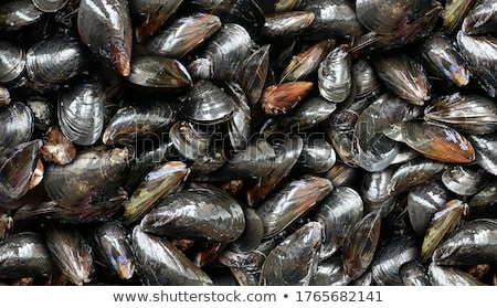 Mussels Background Stock photo © Lightsource