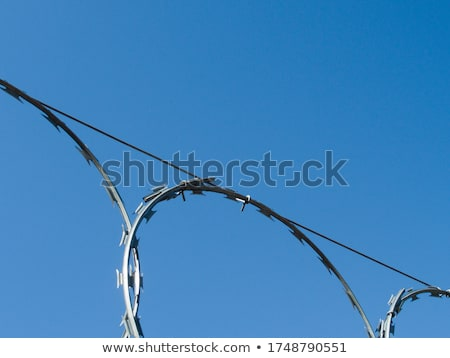 borotva · drót · zöld · kerítés · felső · fém - stock fotó © luissantos84
