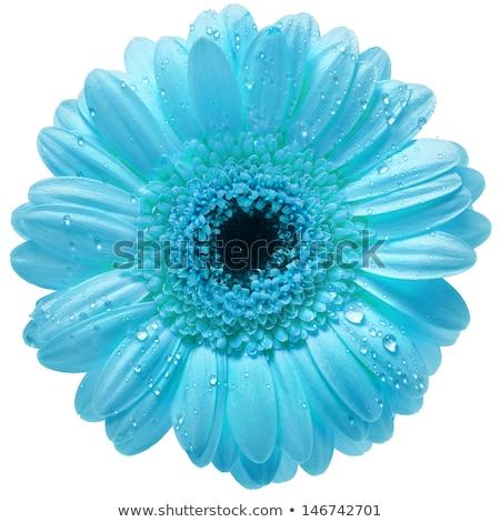 virág · szirmok · harmat · cseppek · közelkép · sekély - stock fotó © redpixel