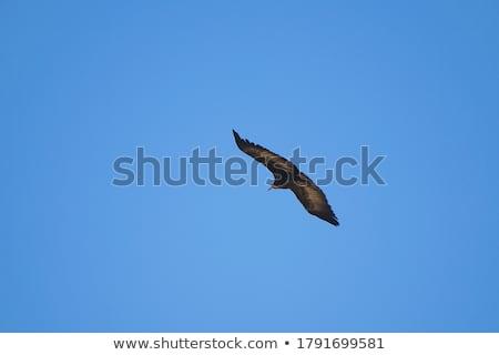 Gier vogel ontwerp kunst Stockfoto © indiwarm