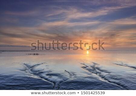 風景 · オランダ語 · 島 · 灯台 · 森林 · 海 - ストックフォト © ivonnewierink