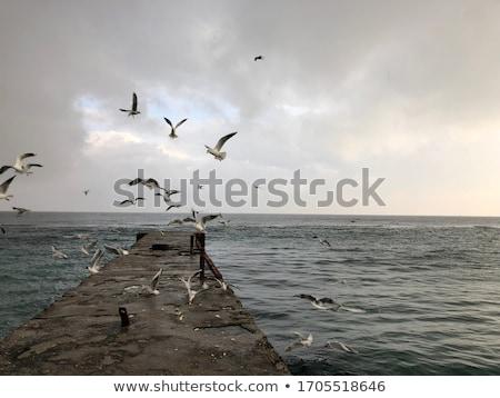 gaivotas · pier · água · paisagem - foto stock © novic
