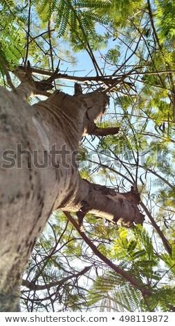 meu · árvore · de · natal · frio · céu · neve · fundo - foto stock © Sniperz