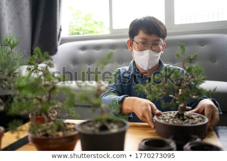 Doctor pruning bonsai tree Stock photo © photography33