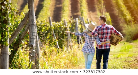 couple picking grapes together stock photo © photography33