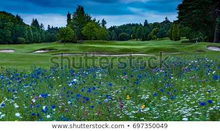 гольф · цветы · Purple · тюльпаны · Пасху - Сток-фото © capturelight