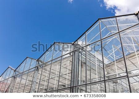 greenhouse roof stock photo © compuinfoto