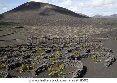 Wine growing in volanic region La Geria Lanzarote  Stock photo © meinzahn