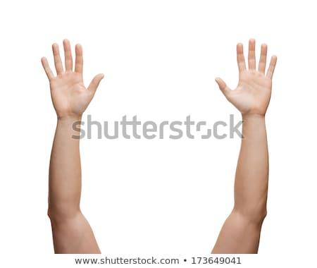 Stok fotoğraf: Insan · eli · yalıtılmış · palmiye · kolun · ön · kısmı · beş