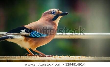 зеленый · природы · птица · Европа · Англии - Сток-фото © taviphoto