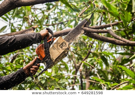 trimming trees with a chainsaw stock photo © smuki