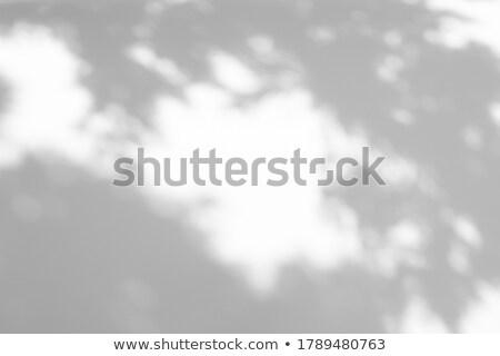 Thuja branches background Stock photo © hraska
