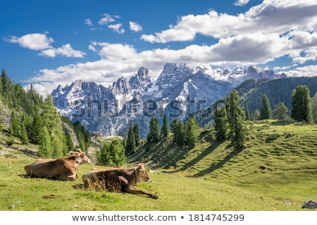 Weide Alpen Berg Wald Natur Berge Stock foto © manfredxy