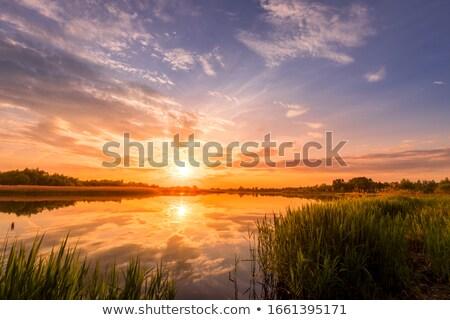 Sunbeams over the reeds Stock photo © olandsfokus
