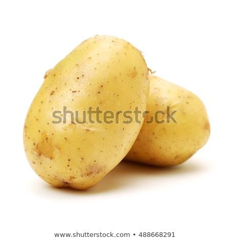 új · krumpli · fehér · izolált · tavasz · stúdió - stock fotó © premiere