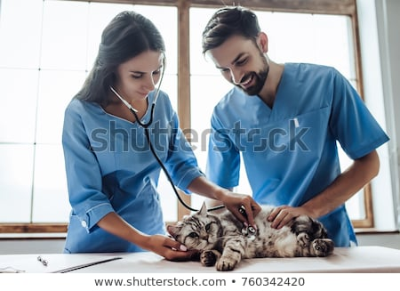 Vet examining a cute cat  Stock photo © wavebreak_media