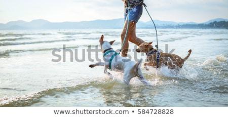 Zdjęcia stock: Woman With Dog Playing On The Beach