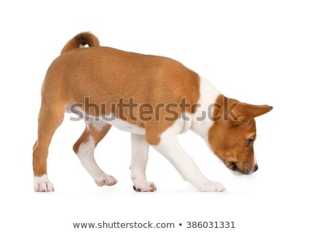 Stockfoto: Puppy · geïsoleerd · witte · zijaanzicht · achtergrond · trein