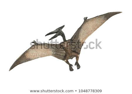 A Pterodactyl Stock photo © bluering