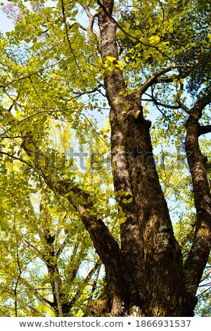 Gazing autumn beauty Stock photo © lithian