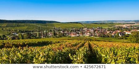Champagne bar afdeling la Frankrijk Europa Stockfoto © FreeProd