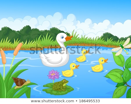 family of ducks in the lake Stock photo © adrenalina