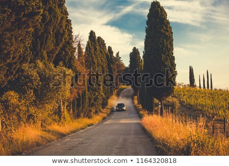 autumn colors along a road in the cypress hills park stock photo © pictureguy