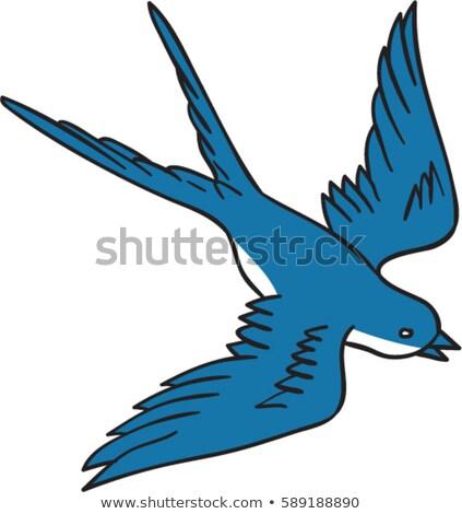 Swallow Flying Down Drawing Stock photo © patrimonio